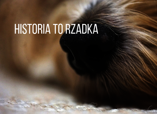 Historia to rzadka